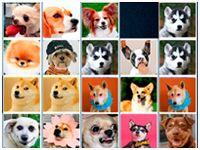 Игра Маджонг Собаки: соедини пары